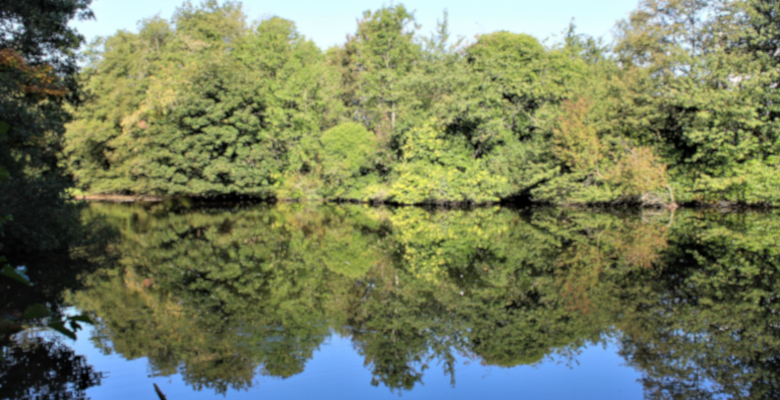 Mill pond in Loxley Valley